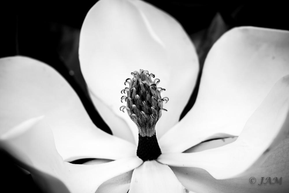 0116 White Magnolia.1