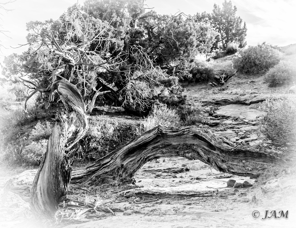 0156 Twisted Tree.3