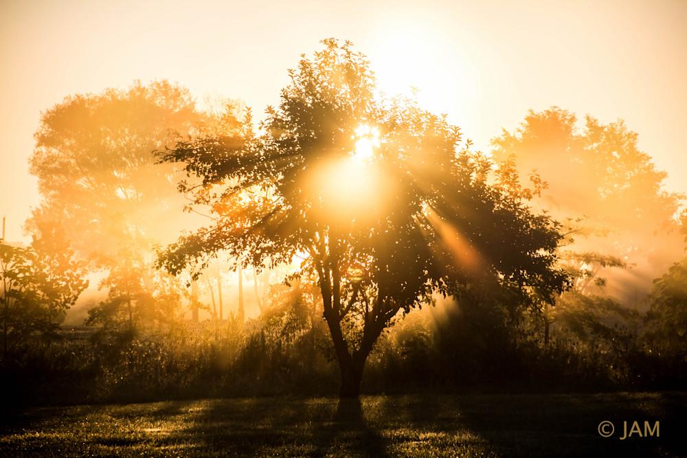 0175 Morning Tree