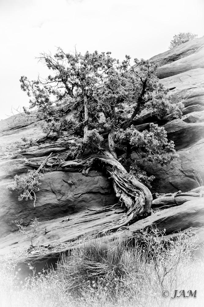 0160 Twisted Tree.7
