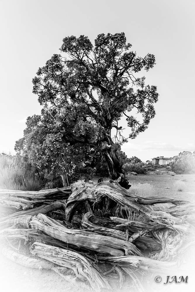 0159 Twisted Tree.6
