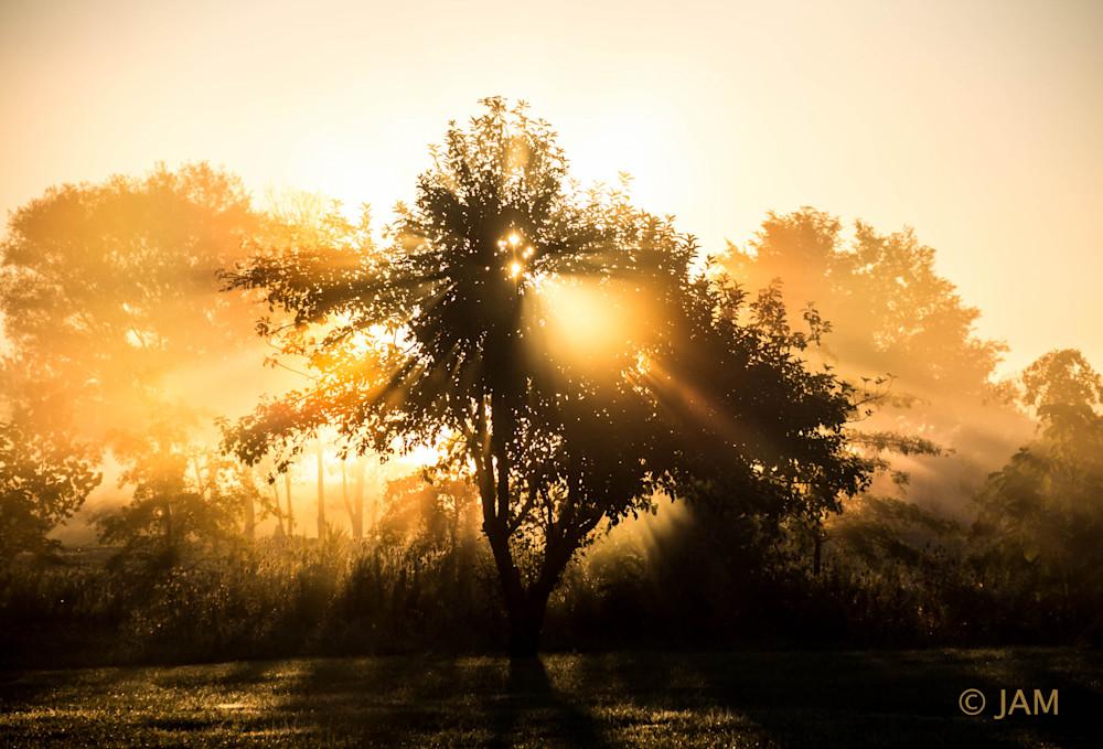 0176 Tree of light