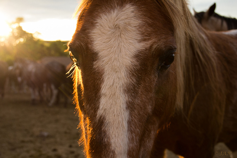 0003 Spiritual pony.1