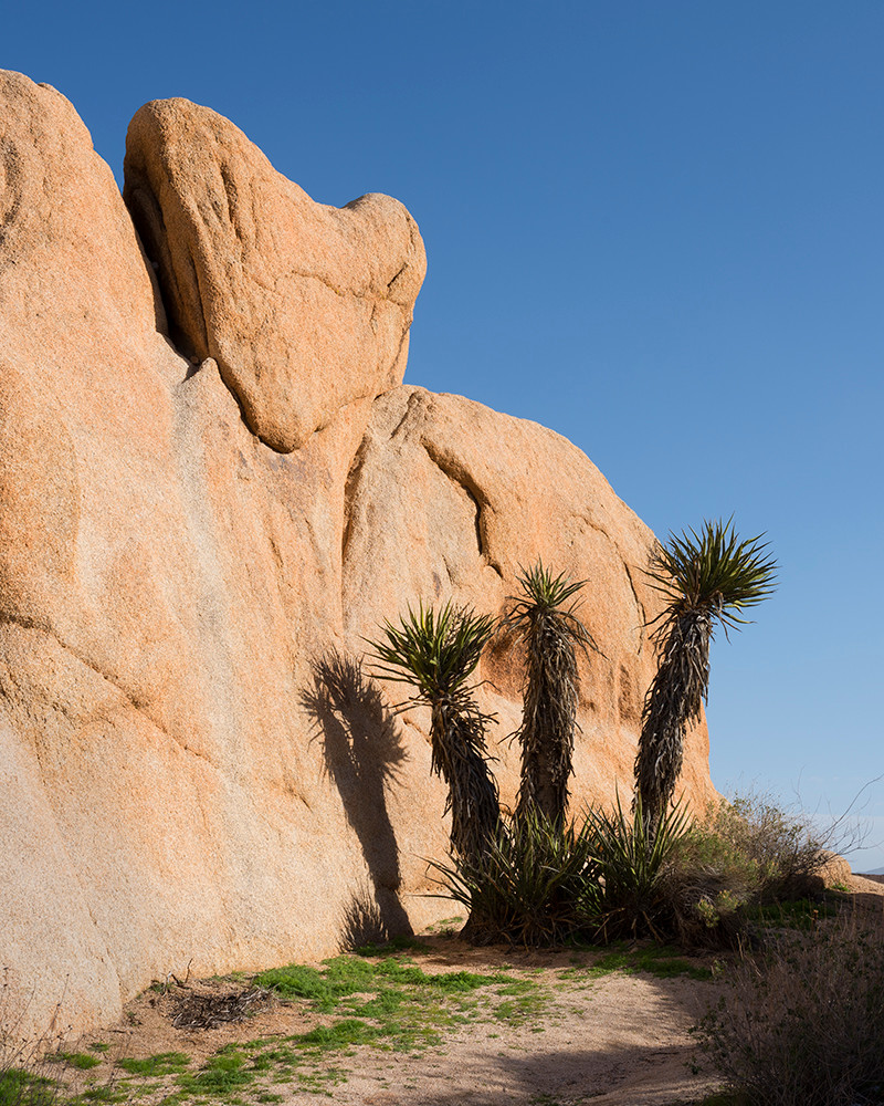 Color photo of a huge heart rock and yucca trees