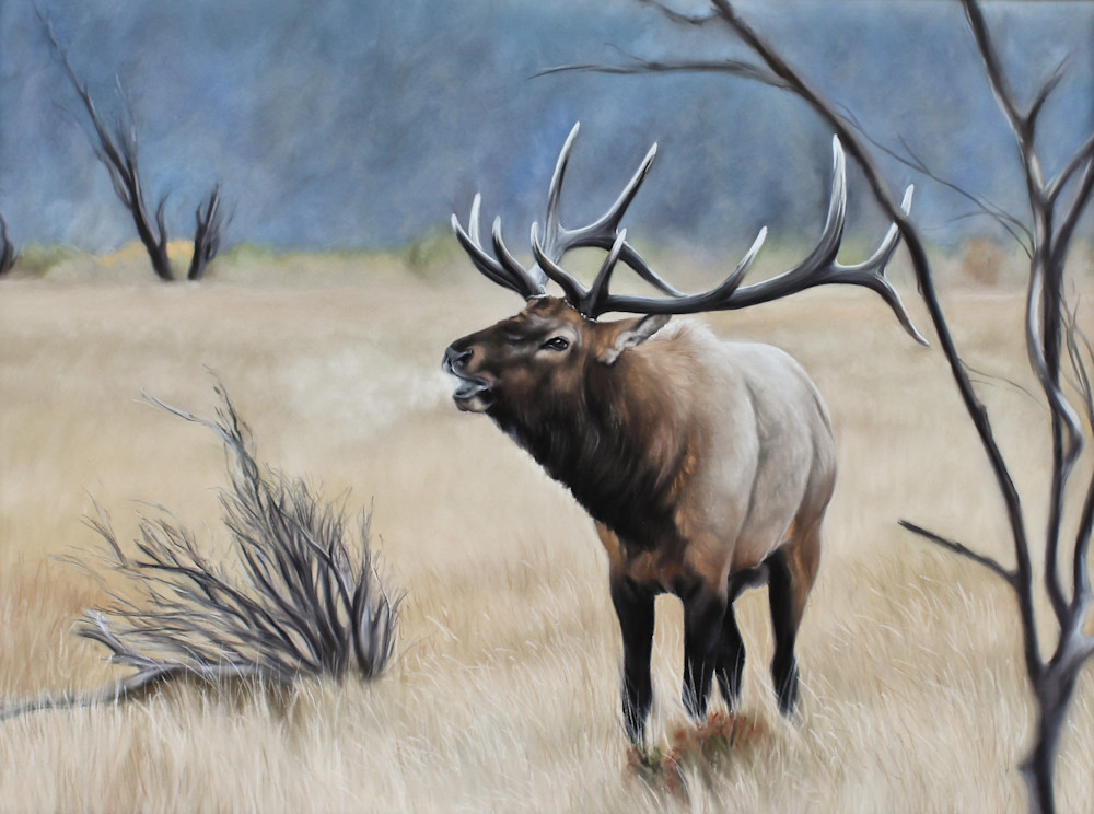 Rocky Mountain Melody Art | Lauren Herr Fine Art