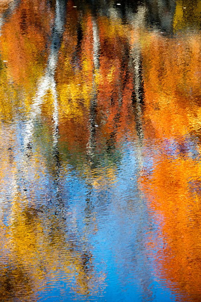 Fall Foliage Forest Wall Art Prints | Robbie George