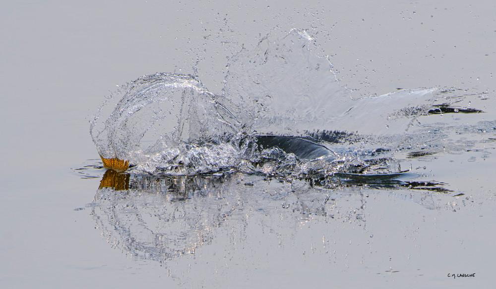 1986 Splash