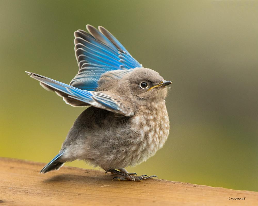 1854 Baby Blue