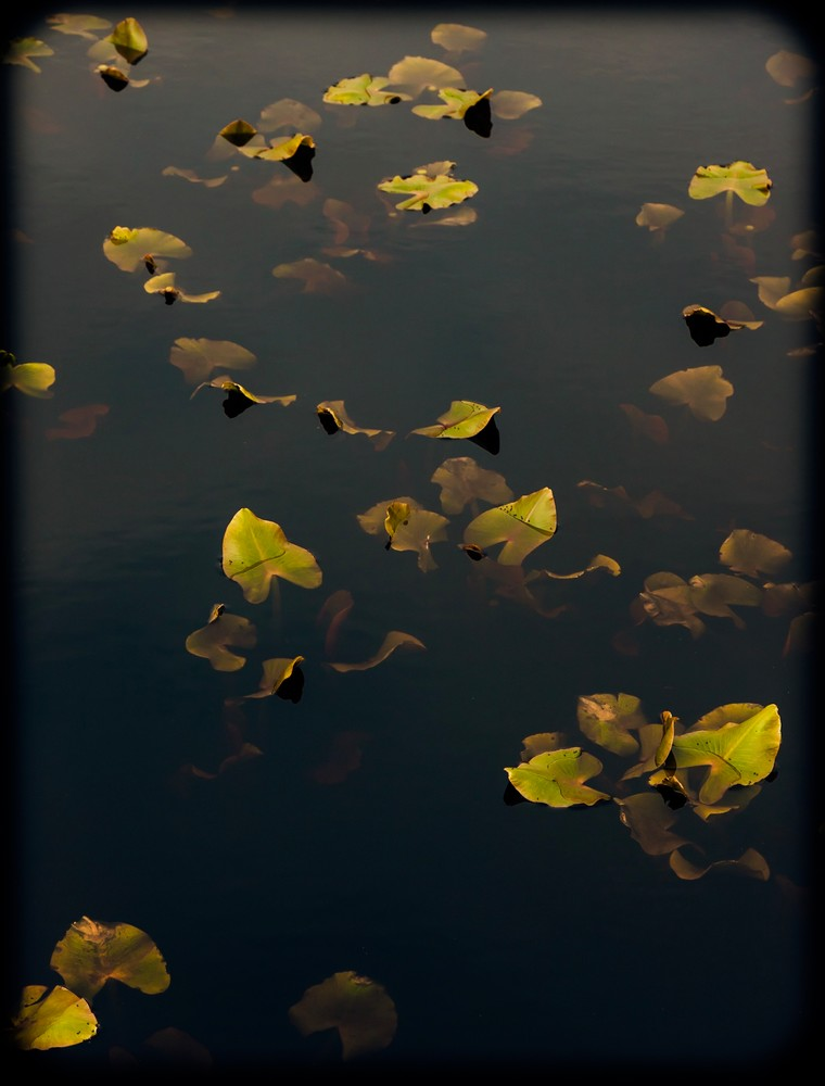 Spring Lily Pads #2