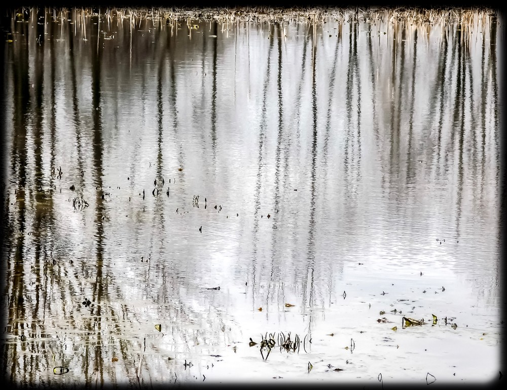Winter Reflection #1