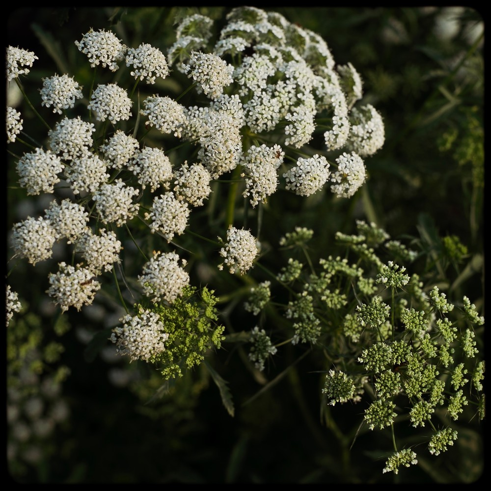 Clusters - green & white