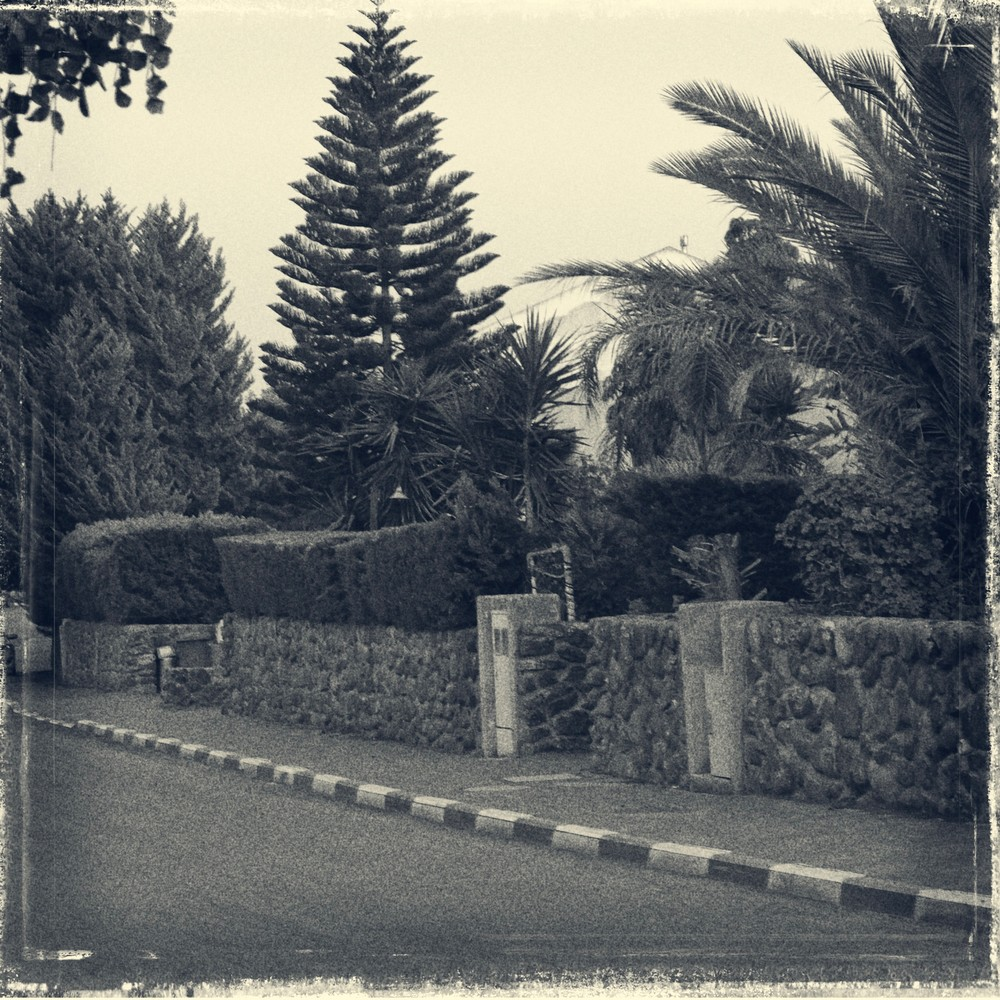 Hedge, Curb And Trees Photography Art | David Frank Photography