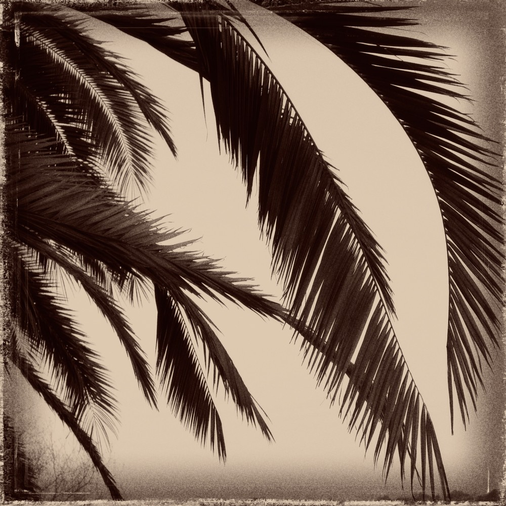 Palm Fronds In The Breeze Photography Art | David Frank Photography