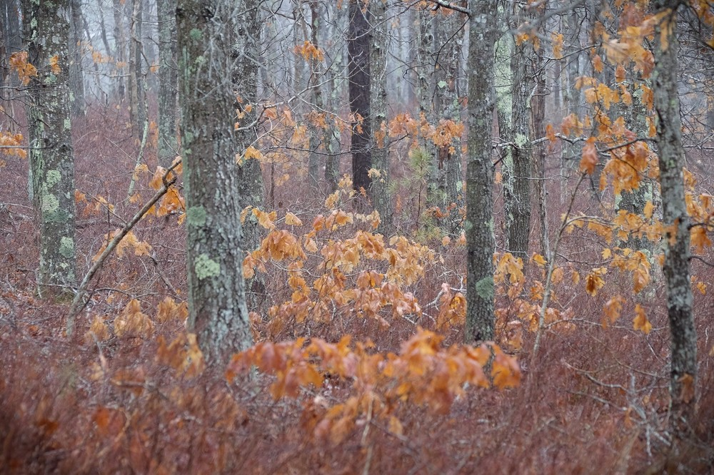Woods in Late Autumn