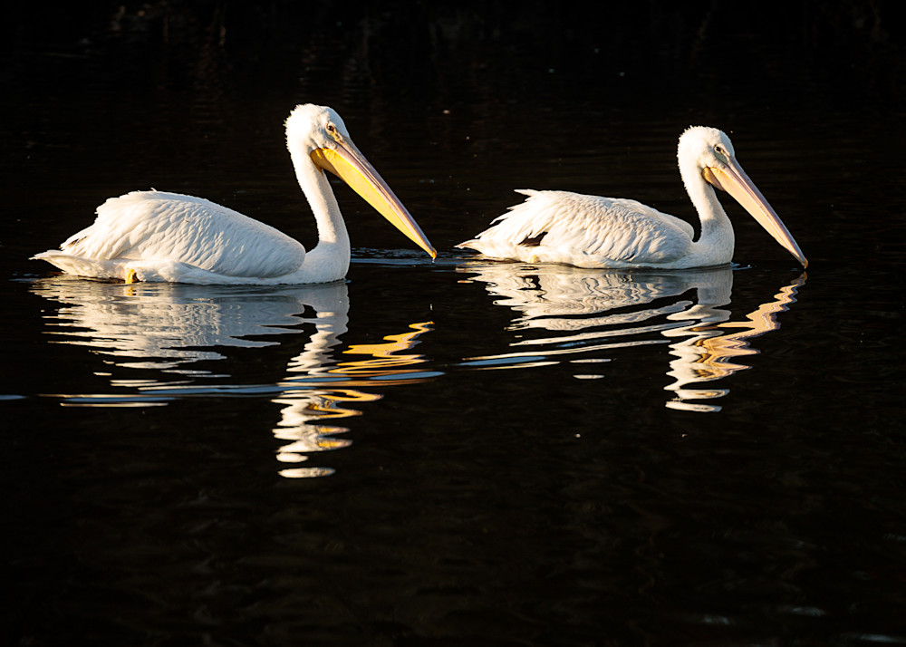 """Pelican Pair"""