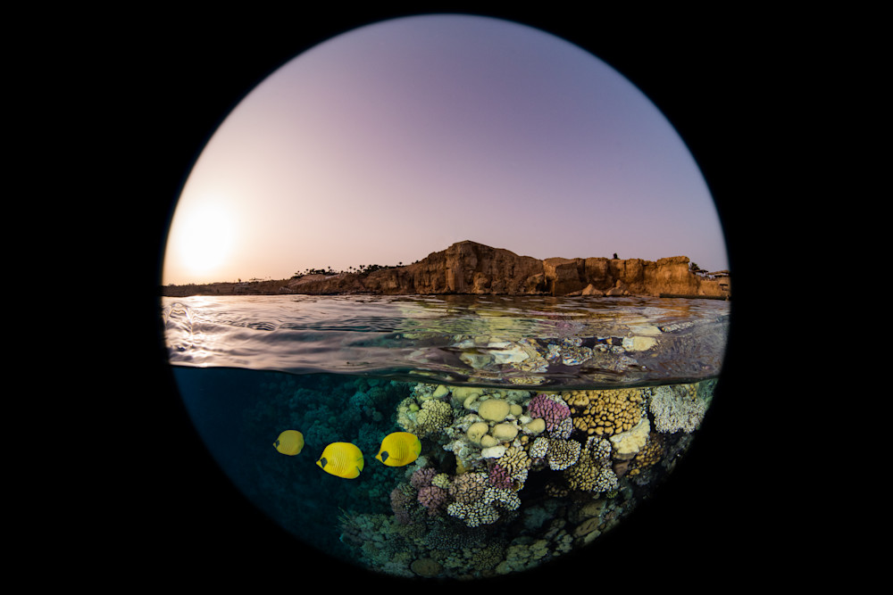 The Sunset over a coral reef with Masked Butterfly fish available as a fine art photograph for sale.