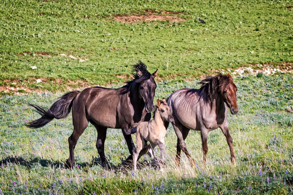 Mustang Gallop Art | Third Shutter from the Sun Photography