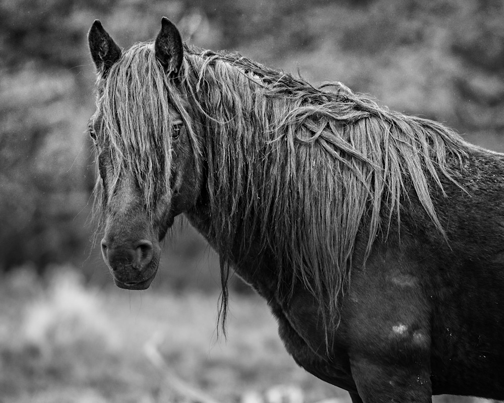 Stallion Guard   Wild Horse Art | Third Shutter from the Sun Photography