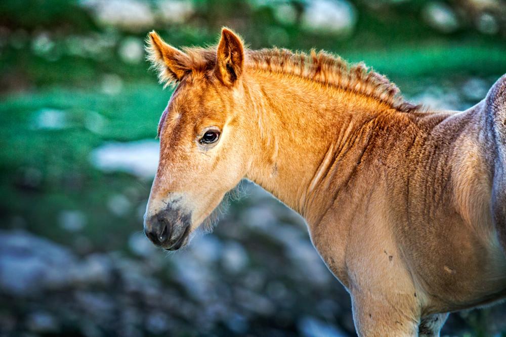 Wild Foal Gaze Art   Third Shutter from the Sun Photography
