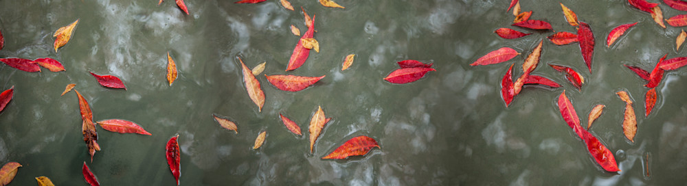 The red leaves floating on water creates the illusion of depth in this one-of-a-kind photograph by artist Vincent DiLeo.
