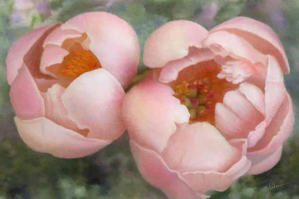 Maya's Coral Peonies. Art print of an original painting by the artist, Mary Ahern.