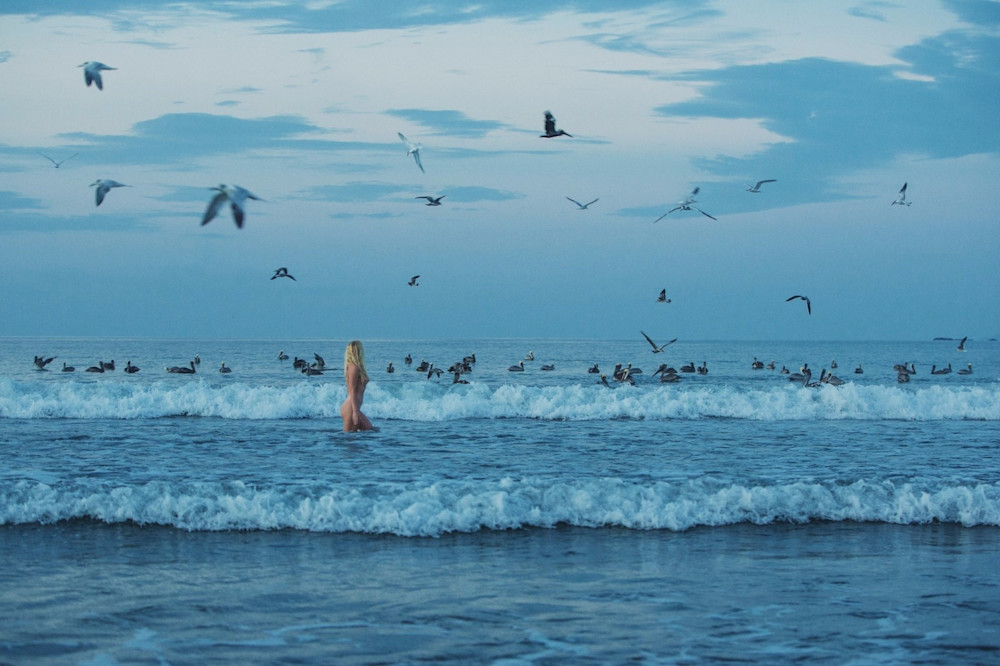 Pelicans and Panama