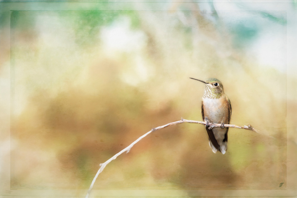 Fine Art Hummingbird six