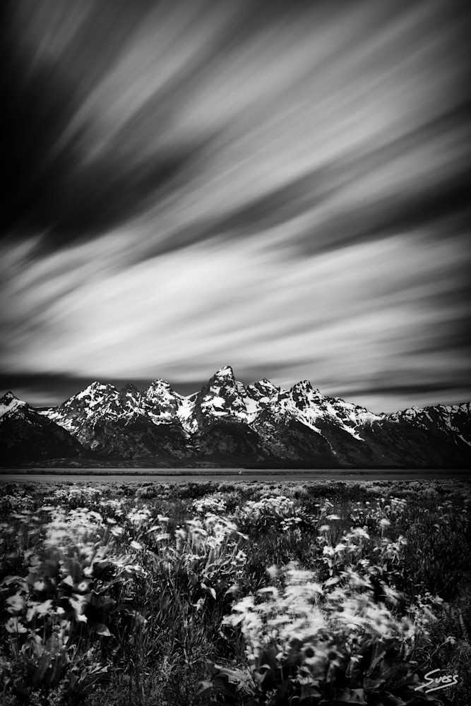 Movement in the Wind - Grand Teton National Park