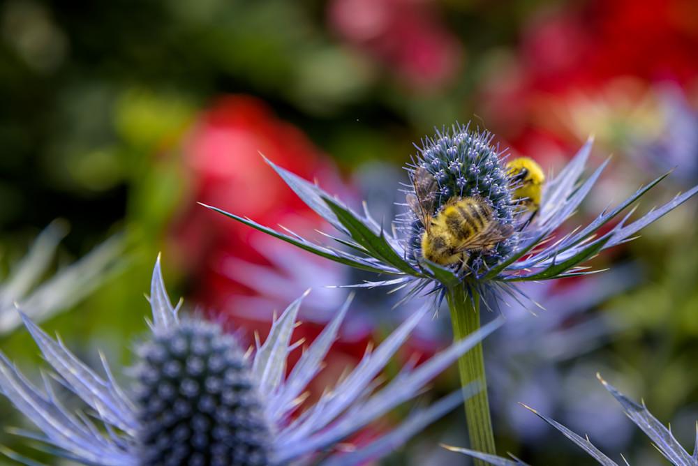 Bumble Bee Buffet