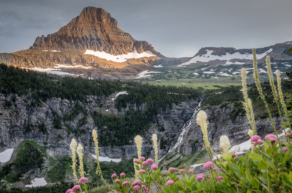 Bear Grass on Logan Pass