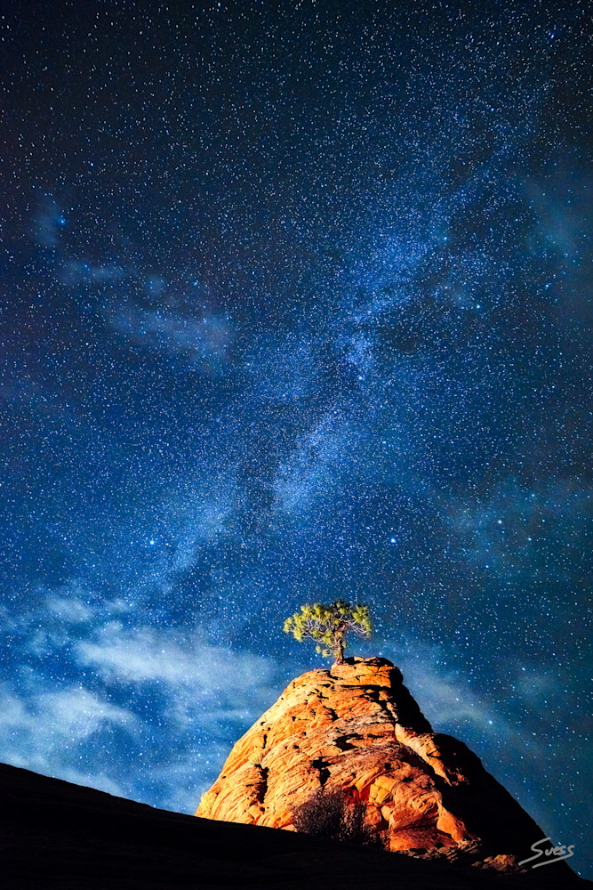 Pinyon Pine and Milky Way - Zion National Park