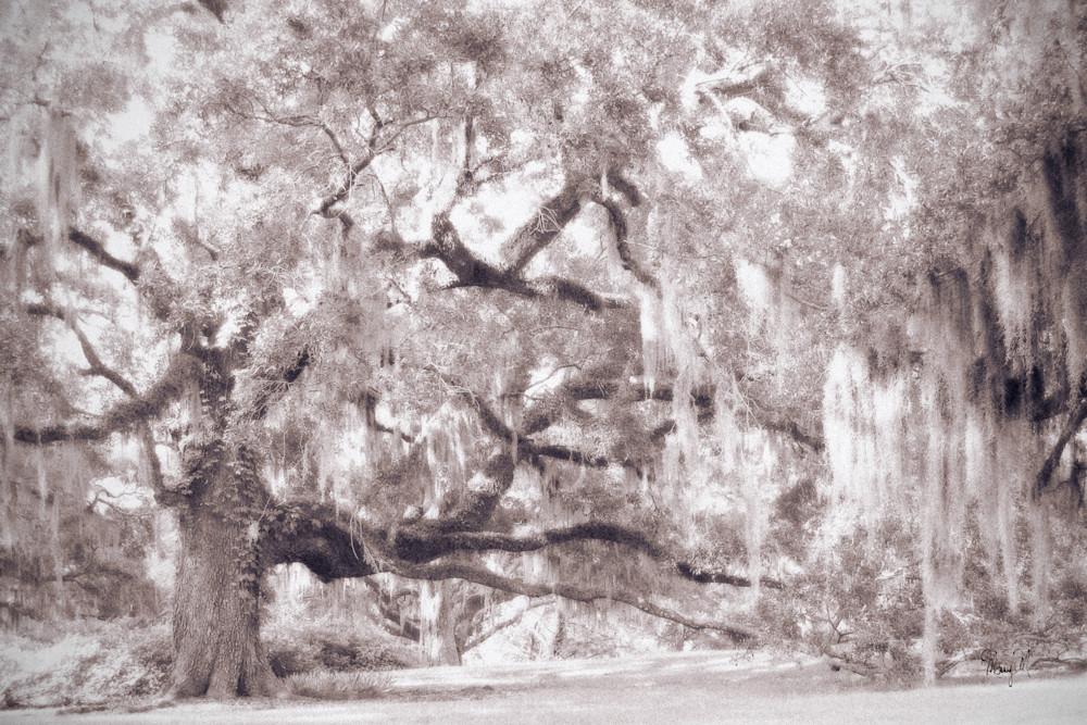 Fine Art Photog The Oaks Art | FortMort Fine Art