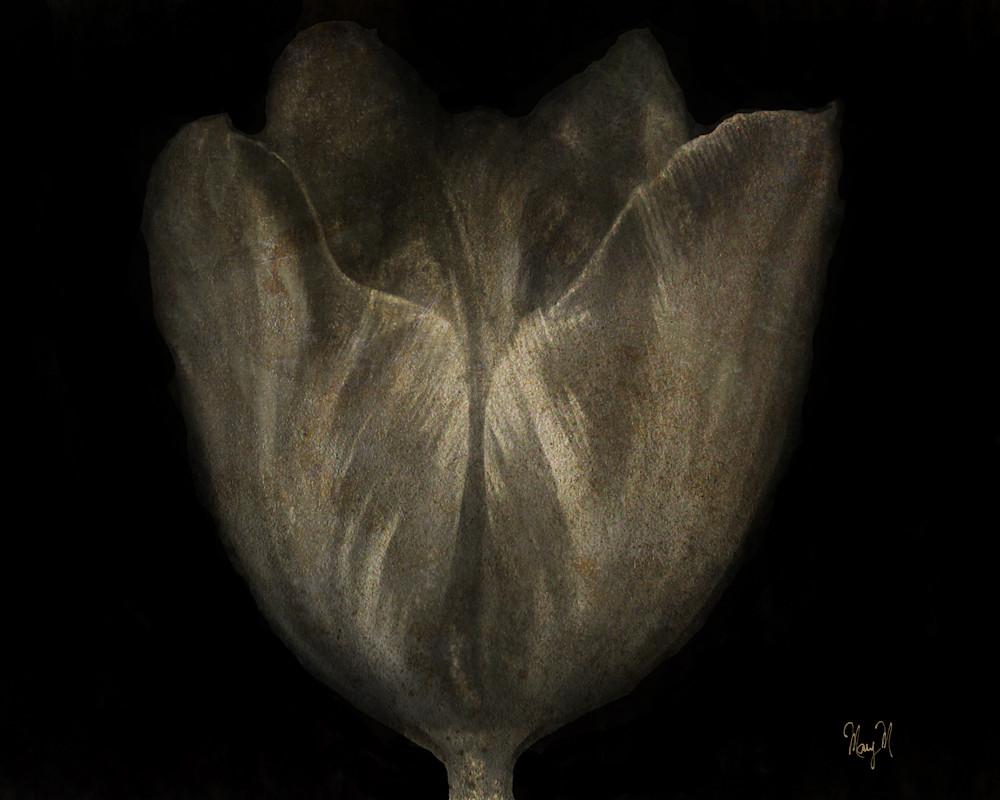 Flowers Charcoal Art | FortMort Fine Art