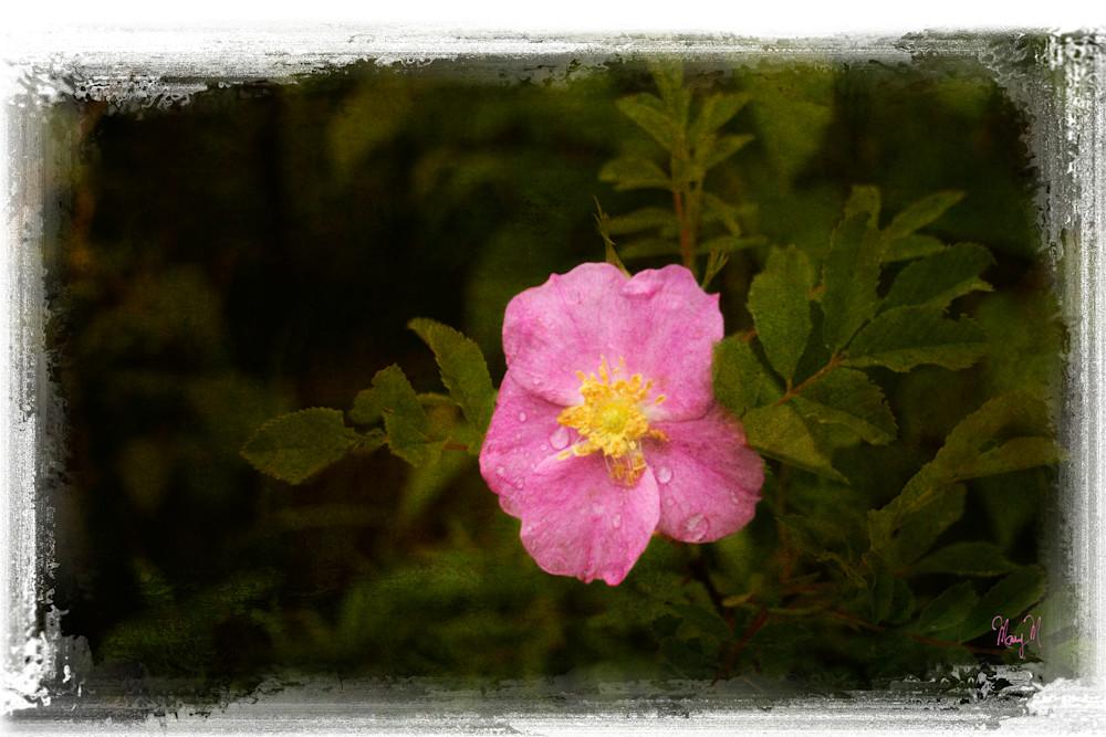 Flowers Pink Petal Art | FortMort Fine Art