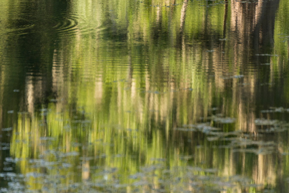 Live Oak Tree Reflection Abstract, Damon, Texas