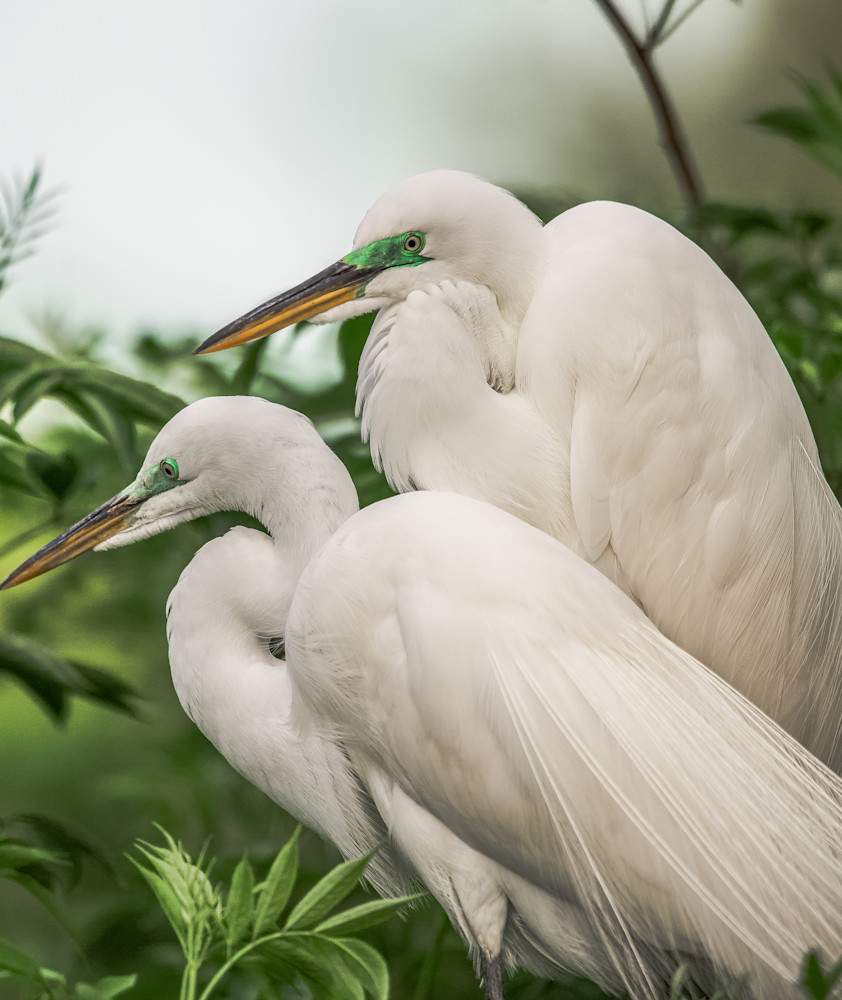 No Regrets Egrets