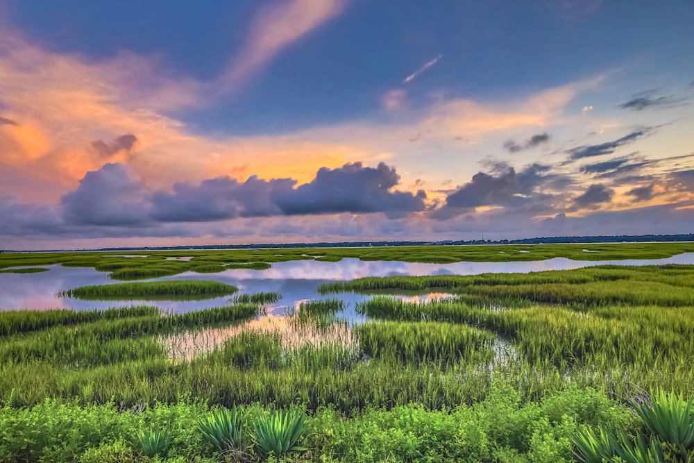 Marsh View Delight