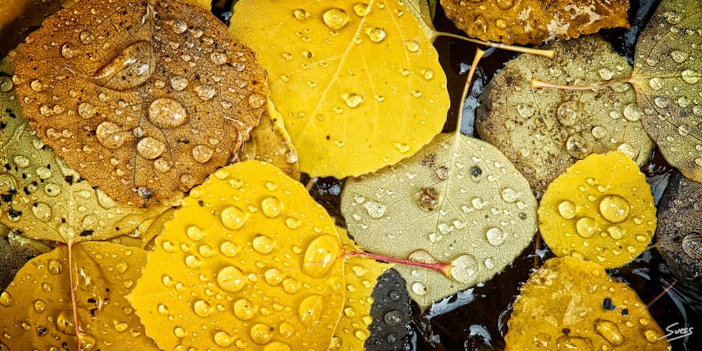 Water Droplets of Fall - Grand Teton National Park