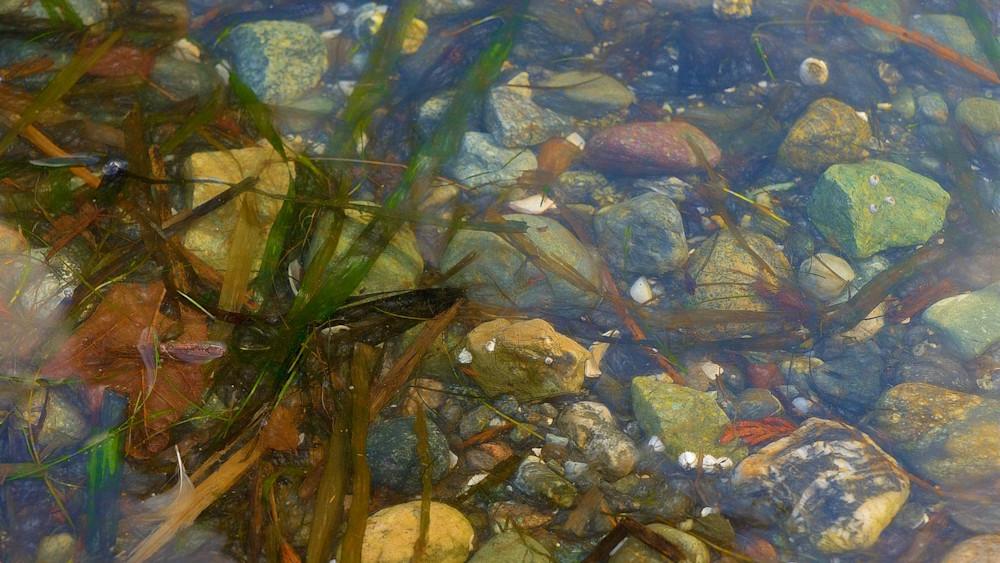 Shoreline Art | Northwest Image