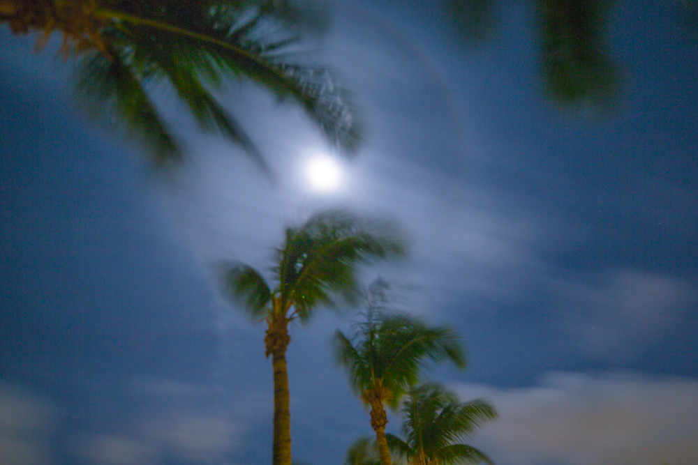 St Martin Palms Under A Full Moon IV | Full Moon Photography Print