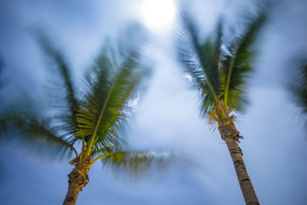 Breezy St Martin Palm Trees | Full Moon Photography Print