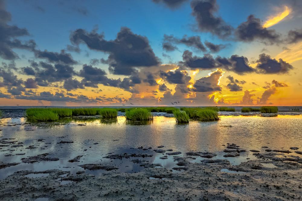Marsh Oasis Photography Art   Phil Heim Photography