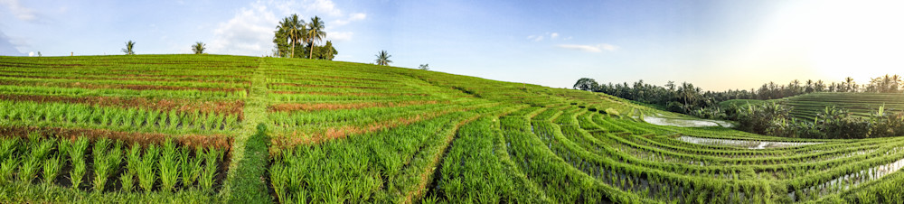 Tabanan Rice Field    Tropical Landscape Photography Print