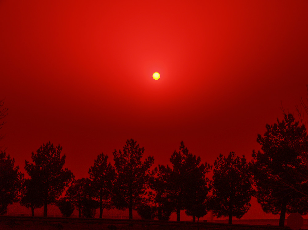 Red Sun Over The Trees | Sunset Photography Print