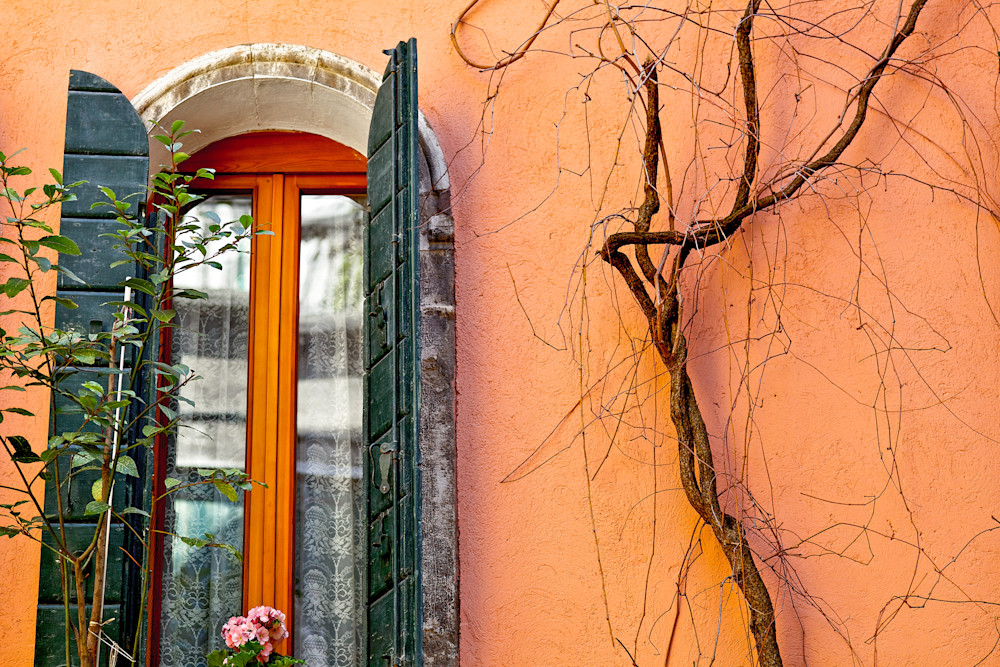 Venice Vine Photography Print | Gifts For Art Lovers