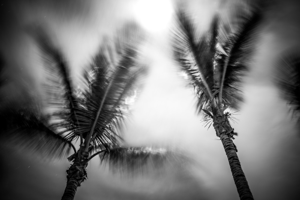 Full Moon Palms | Black and White Landscape Photography