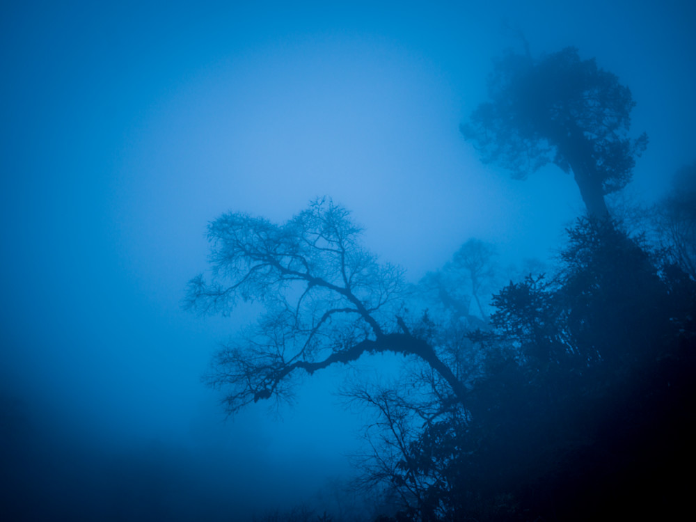 Lonely Tree in the Blue Mist | Nature Art Photography