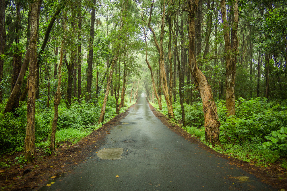 Mauritius Magical Road | Nature Art Photography