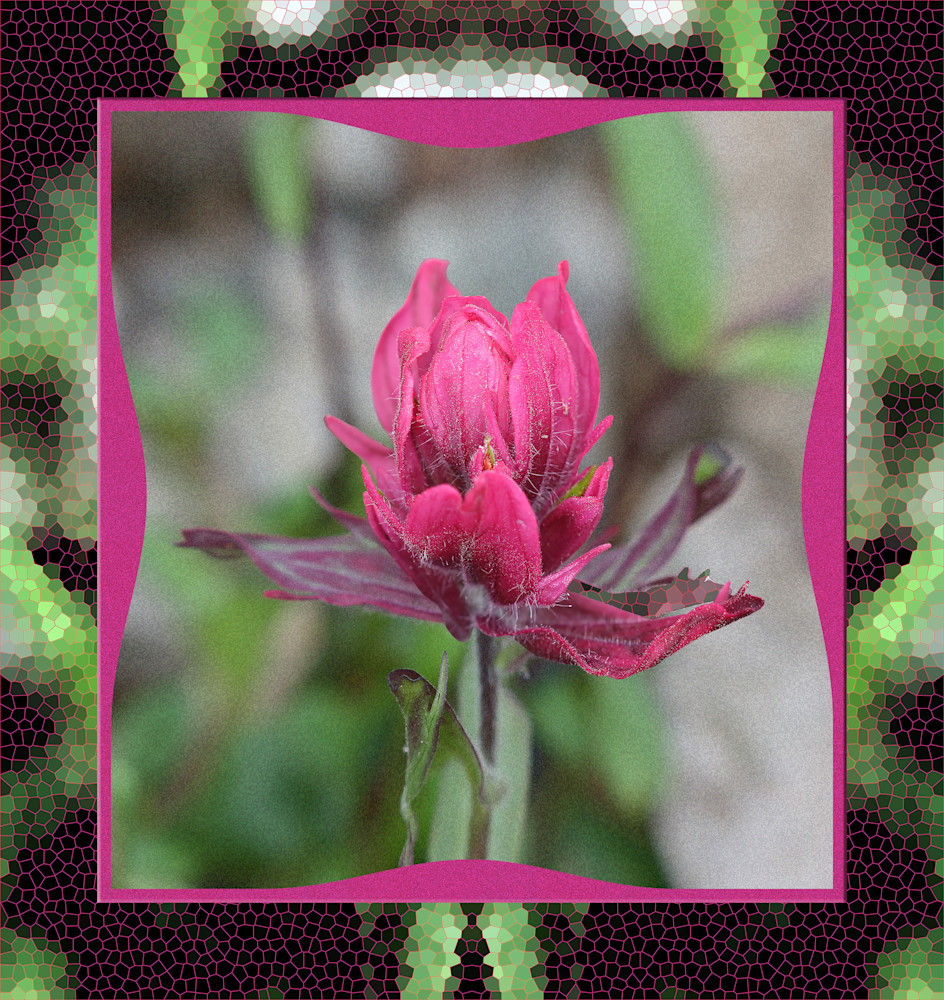Rosy Paintbrush print of photograph taken in the San Juan Mountains transformed into digital art for sale by Maureen Wilks