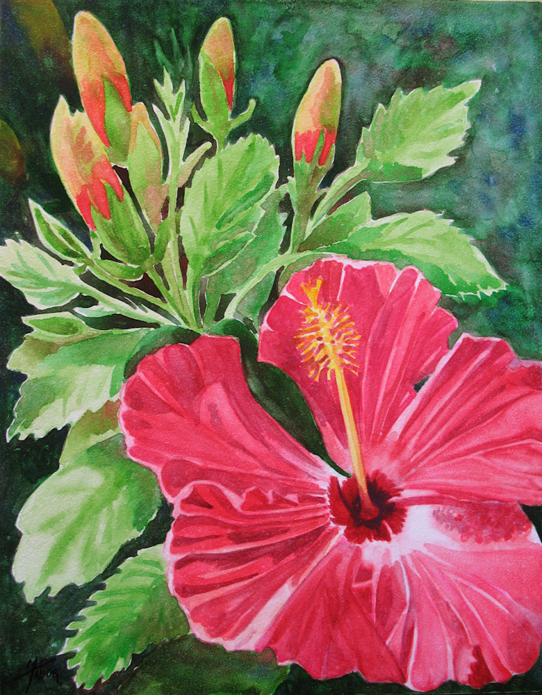 Hibiscus 1 Art   Michele Tabor Kimbrough